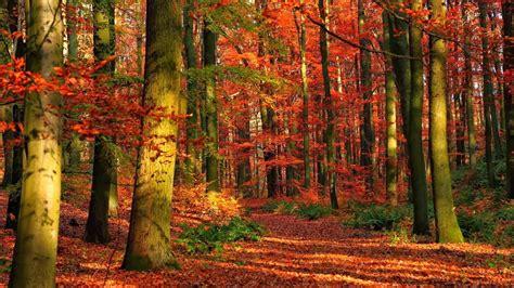 imagenes de paisajes naturales bosques fotos de naturaleza animales paisajes animadas y