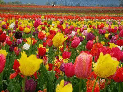 kumpulan nama bunga  bahasa inggris beserta gambar