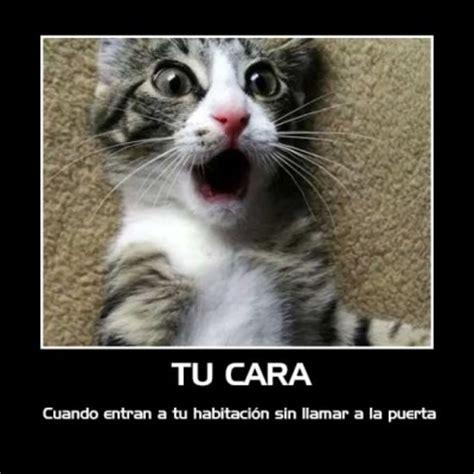 imagenes chistosas gatos gatos tiernos con mensajes chistosos