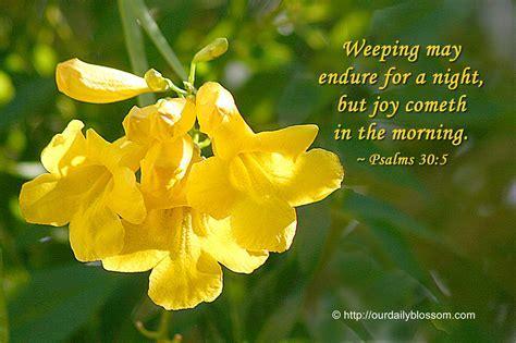 Our Daily Blossom