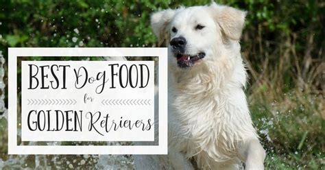 best food for golden retrievers best food for golden retrievers is it or commercial kibble