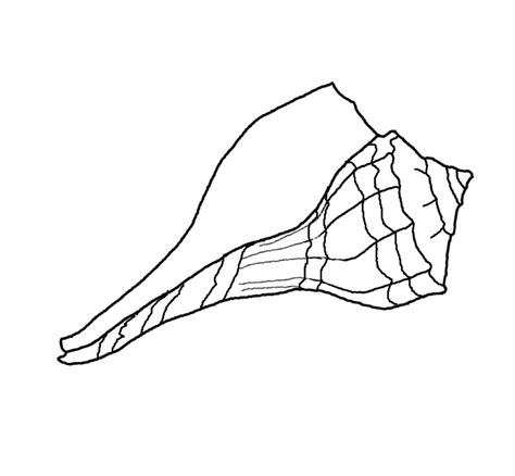 free coloring pages of sea shell