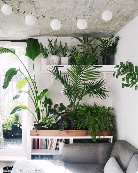 best living room plants 25 best ideas about living room plants on pinterest