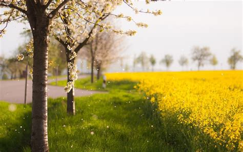 imagenes para fondos de pantalla paisajes fondos de pantalla de paisajes naturales medio ambiente