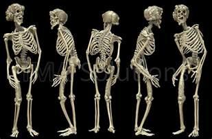 The Poem Vanity Johnny Depp Has A Life Size Elephant Man Skeleton Replica