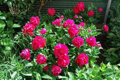 plantas para jardines decoraci 243 n de jardines grandes