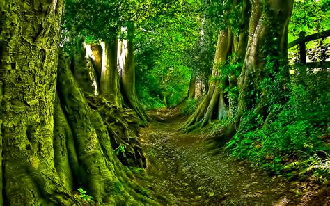 green forest wallpapers green forest path wallpaper dreamlovewallpapers