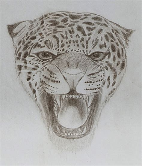 imagenes de jaguares para dibujar dibujo de un leopardo taringa
