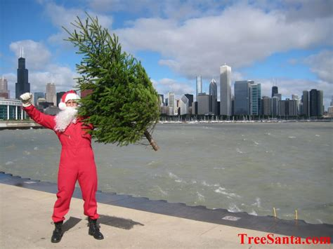 treesanta chicago christmas tree delivery christmas