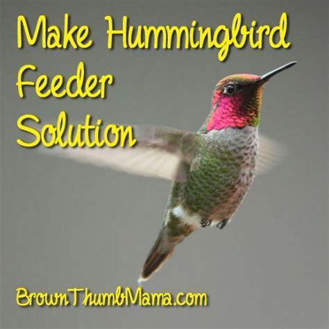how to make hummingbird feeder solution bird feeders