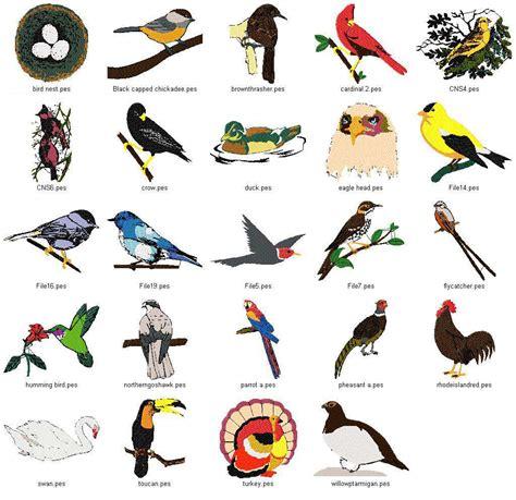 bird names dobe pinterest bird and animal