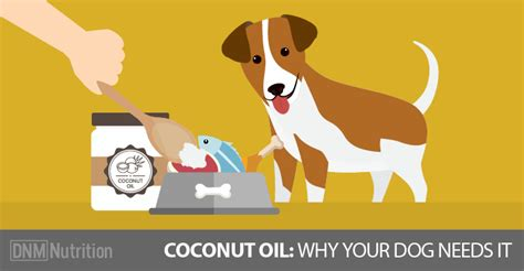 coconut dogs coconut for dogs our 3 favorite recipes
