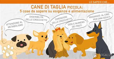alimentazione cani piccola taglia di taglia piccola le cose da sapere sulla sua salute