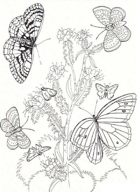 coloring page flowers and butterflies free printable butterfly coloring pages for kids
