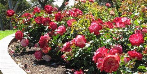 esempi di giardini esempi di giardino progettazione giardino