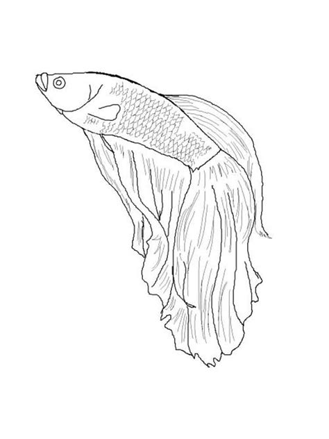 betta fish coloring pages download and print betta fish