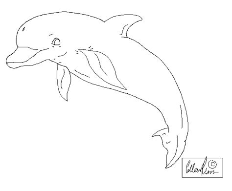 dolphin template silly dolphin template by kuwaizair on deviantart