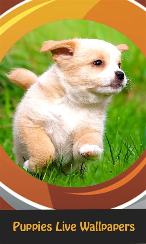 puppies live wallpaper top puppies live wallpapers free android app android freeware