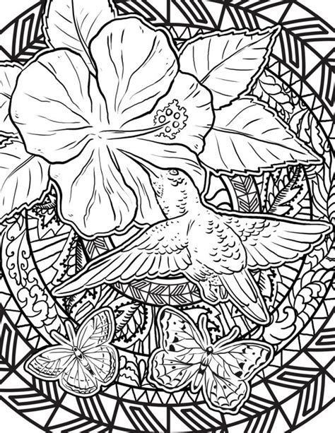 coloring pages for adults hummingbird items similar to hummingbird coloring page adult coloring