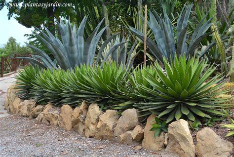 imagenes de jardines xerofilos plantas crasas o suculentas plantas jard 237 n