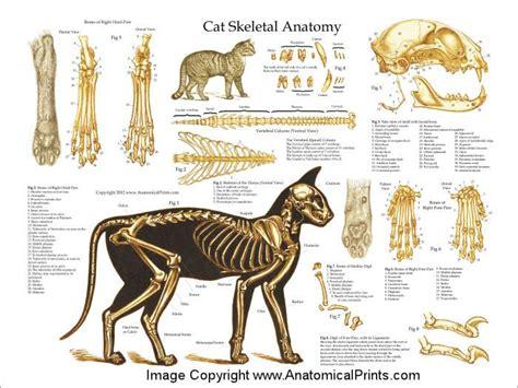 cat skeleton diagram cat skeletal anatomy poster 24 x 36 needle felting
