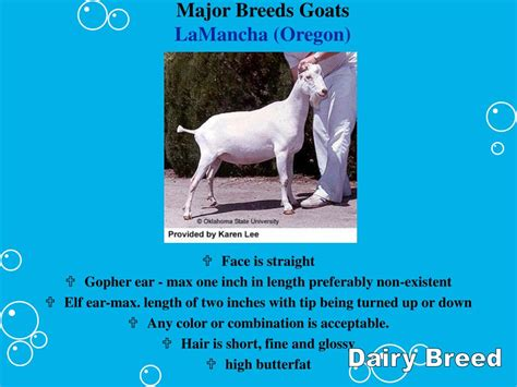 major breeds ppt goat breeds and selection powerpoint presentation id 608832