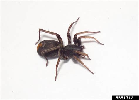 how to keep spiders out of basement 100 how to get rid of spiders in a basement ways to get rid of spiders and make your home
