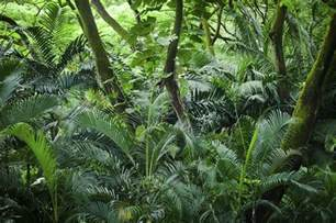 9 major primary producers in the tropical rainforest