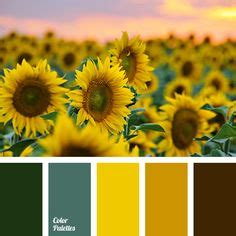yellow color schemes 1000 ideas about yellow color schemes on