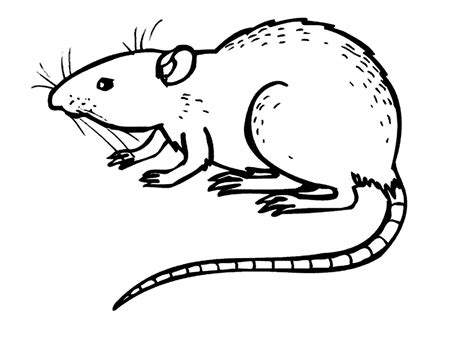 free printable rat coloring pages for kids