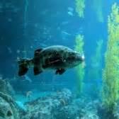 California State Monterey Bay Mba Ranking by Monterey Bay Aquarium 7777 Photos 3179 Reviews