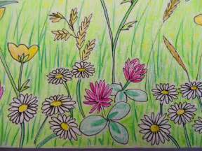 How To Draw A Garden With Flowers Bunny Mummy This Weeks Drawing Summer Fields