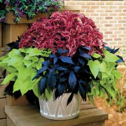 in door plants pot three four plants argements potted plants for a beautiful garden containers fit