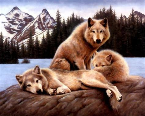 a wolf wolf family teddybear64 wallpaper 20008383 fanpop