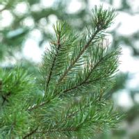 northern virginia christmas tree farms fairfax family events and activities near fairfax virginia