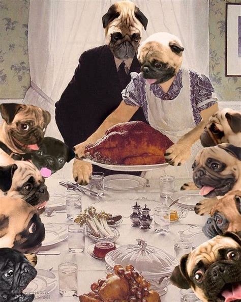 happy thanksgiving pug a pug s thanksgiving cool stuff