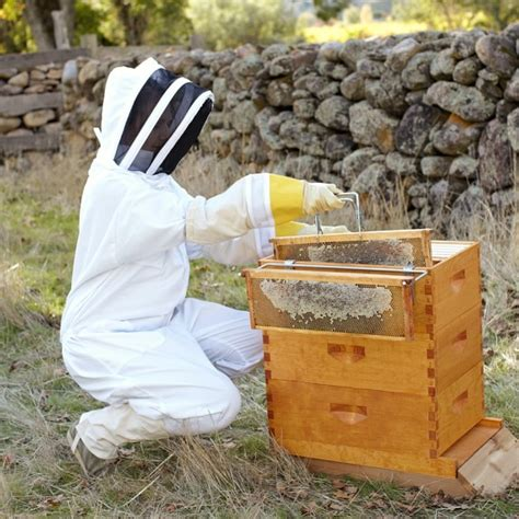 backyard beehives backyard beehive williams sonoma