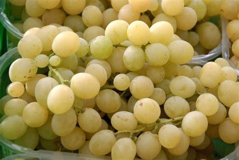 uva da tavola varieta uva da tavola uva