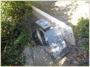 creature comforts fallbrook a all animal control skunk removal san diego california