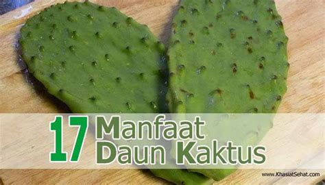 17 Khasiat Daun Kaktus untuk Kesehatan   KhasiatSehat.com