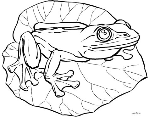 Cute Frog Coloring Books For Drawing Kids Coloring Page Of A Frog
