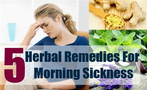 5 best herbal remedies for morning sickness best herbs
