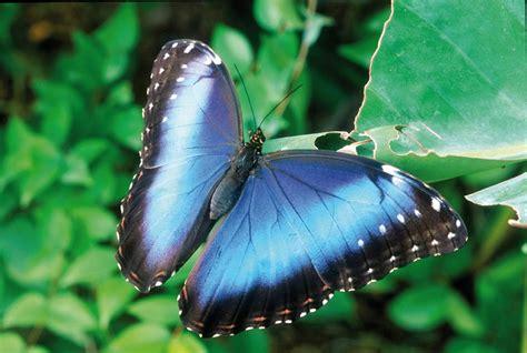 significato farfalla in casa le farfalle di butterfly arc