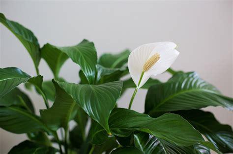 houseplants      home  improve air