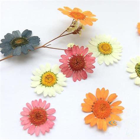 imagenes de flores secas dried flower cards reviews online shopping dried flower