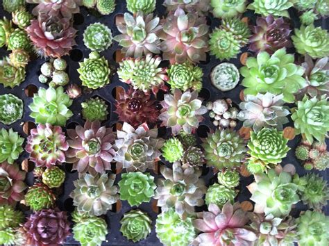 succulents plants succulent wall art belovenest