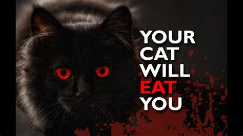 how to a not to attack cats your cat will eat you cats compilation not evil cat when cat attacks baby