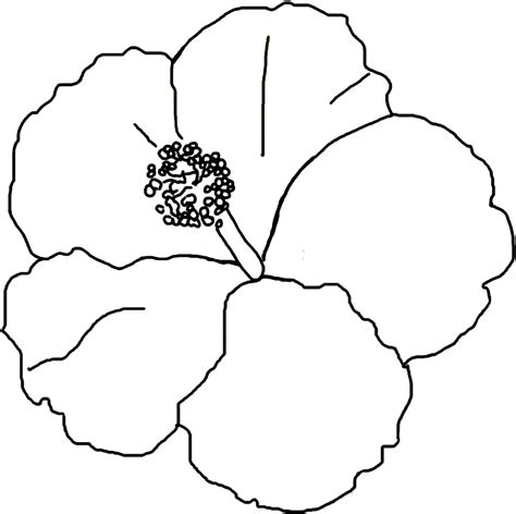 Free Printable Hibiscus Coloring Pages For Kids Print Coloring Pages