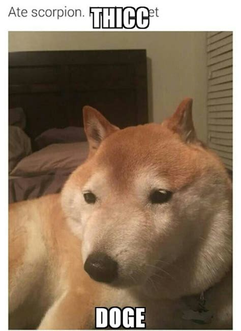 What Breed Is Doge Meme - doge memes daily page 2