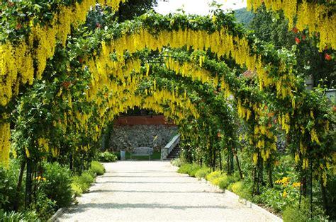 Garden Flower Arch Golden Flower Arch Hd Desktop Wallpaper Widescreen High Definition Fullscreen